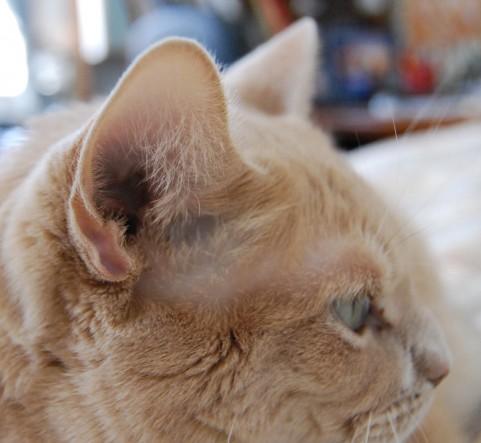 【比較】補聴器・集音器のオススメ!高性能・安価!【難聴・聴覚障害】