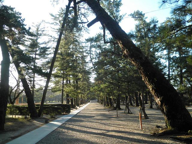 出雲大社松の道2