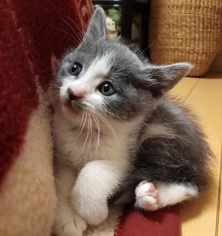 なぜネコは可愛いのか?~猫の里親募集に学ぶ狂気的な慈善保護団体~